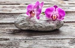在灰色小卵石和老纹理木头的精美桃红色兰花 免版税库存图片
