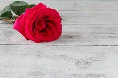 在灰色木背景的一朵柔和的淡色彩玫瑰 免版税库存照片