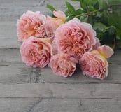 在灰色木头的玫瑰 库存照片