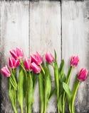 在灰色白色木墙壁背景的桃红色郁金香 免版税库存照片