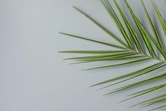 在灰色石背景的尖刻的棕榈树叶子 最低纲领派现代样式 植物的叶子样式 海报模板 免版税库存照片