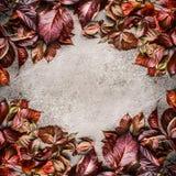 在灰色石背景的美好的创造性的红色秋叶布局框架 季节性秋天概念 免版税图库摄影