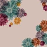 在灰色背景的五颜六色的雏菊花 图库摄影