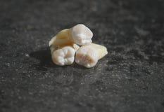 在灰色背景的健康牙 免版税库存图片