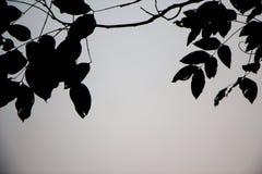 在灰色背景的叶子黑剪影 图库摄影