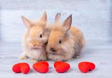 在灰色背景的夫妇小浅褐色的小兔在与微型心脏的华伦泰的题材在他们前面 免版税库存图片