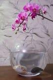 在灰色背景的桃红色兰花和水族馆水族馆 免版税库存照片