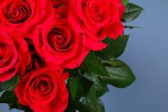 在灰色背景的桃红色玫瑰,在淡色纸 复制文本的空间 模板母亲节3月8日, 库存图片