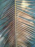 在灰色背景的棕榈叶 免版税库存照片