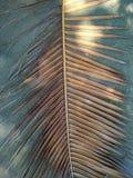 在灰色背景的棕榈叶 免版税图库摄影