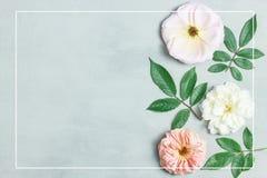 在灰色背景的欢乐花构成 顶视图 顶上 免版税库存图片