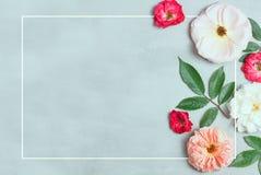 在灰色背景的欢乐花构成 顶视图 顶上 免版税库存照片