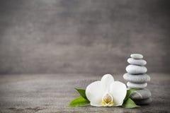 在灰色背景的白色兰花和温泉石头 库存照片