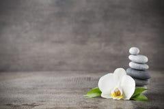 在灰色背景的白色兰花和温泉石头 库存图片