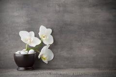 在灰色背景的白色兰花和温泉石头 免版税图库摄影