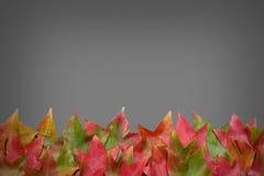 在灰色背景的秋叶 免版税图库摄影