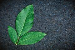 在灰色背景的绿色叶子 平的位置 顶视图 复制空间 免版税图库摄影