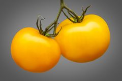 在灰色背景隔绝的束黄色蕃茄 免版税库存图片