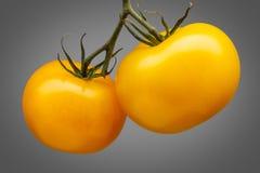 在灰色背景隔绝的束黄色蕃茄 库存照片