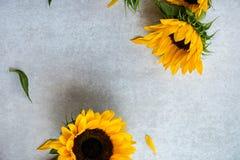 在灰色背景,秋天概念的黄色向日葵花束 库存图片