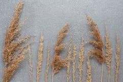在灰色背景,顶视图的干草 干耳朵的秋天安排 库存照片