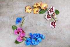 在灰色背景,顶视图的美丽的热带兰花花 图库摄影