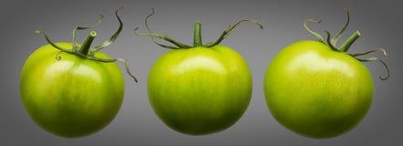 在灰色隔绝的小组绿色蕃茄 免版税图库摄影