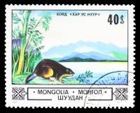 在炭灰的欧亚海狸铸工纤维我们湖、动物和风景serie,大约1982年 库存照片