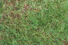 在烂掉中的自然草在地面上留下说谎 库存照片