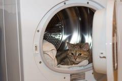 在烘干机的猫 库存照片