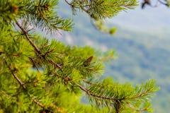 在烟囱岩石和湖附近的场面在蓝色背脊山n诱使 免版税库存图片