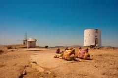 在烧焦的太阳下的骆驼 免版税库存图片