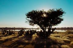 在热天气的树剪影 库存照片