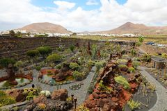 在热带仙人掌庭院Jardin de Cactus的惊人的看法在Guatiza村庄,兰萨罗特岛,加那利群岛 免版税库存照片