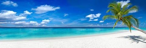 在热带天堂海滩的椰子树 免版税库存图片
