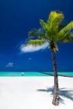 在热带完善的海滩的棕榈树在有跳船的马尔代夫 免版税库存图片