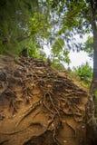 在热带山腰的根 库存图片