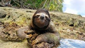 在热带岸地面的逗人喜爱的三趾怠惰  免版税库存照片