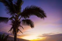 在热带日落的棕榈树 免版税库存照片