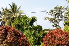 在热带树之间的鸟 免版税库存照片