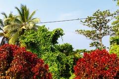 在热带树之间的鸟 库存照片