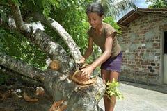 在热带栖所拉丁美州青少年割断一个椰子 库存照片