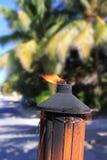 在热带棕榈树密林射击火炬火焰 库存图片