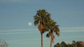 在热带棕榈树旁边的满月在晚上 股票视频