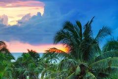 在热带棕榈树的日落 免版税库存照片