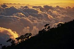 在热带森林上 库存图片