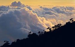 在热带森林上 免版税库存照片