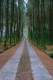 在热带森林中间的路 免版税库存照片