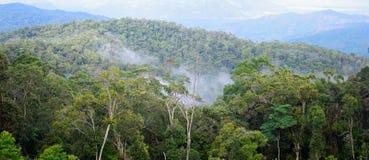 在热带森林的全景在雨以后 免版税库存图片