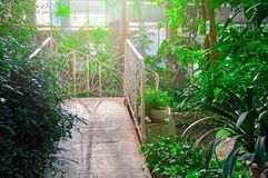 在热带植物包围的池塘的美丽的透雕细工金属桥梁 明亮的阳光通过叶子,浪漫背景 免版税库存图片